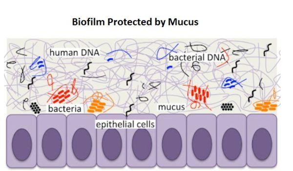 Biofilm mucus.jpg