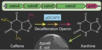 Decaffeination Operon [6].