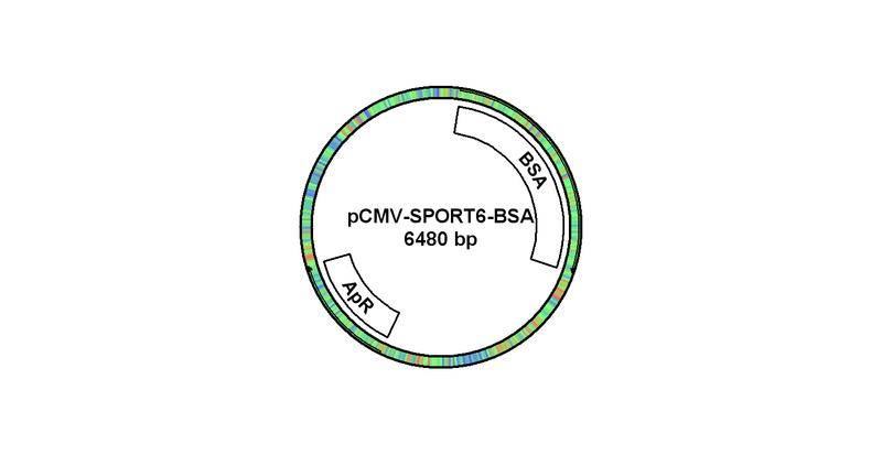 File:PCMV-SPORT6-BSA.bmp