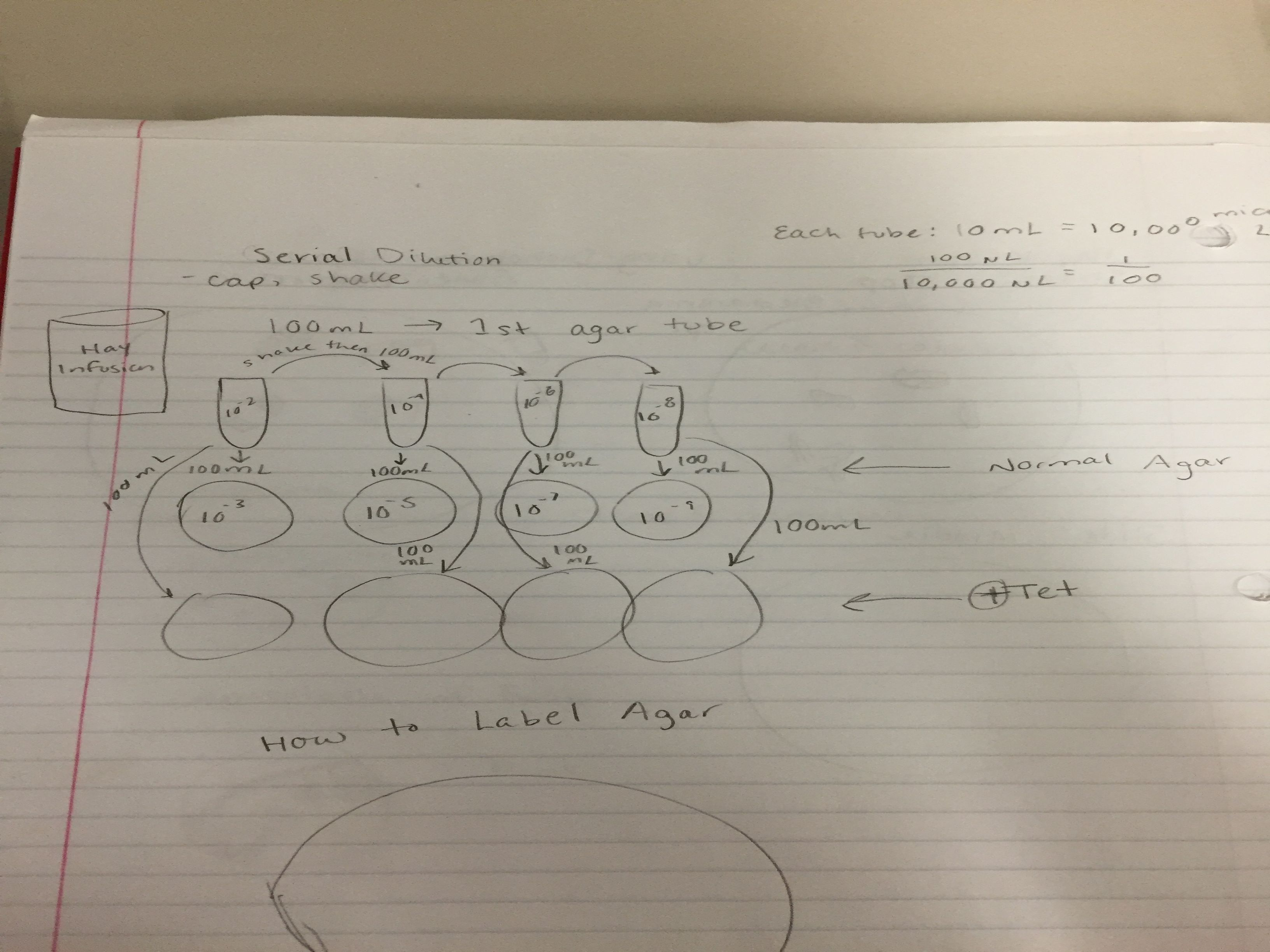 Diagram of Serial Dilution.JPG