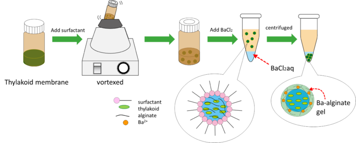 Synthesis marimo by surfactant.png