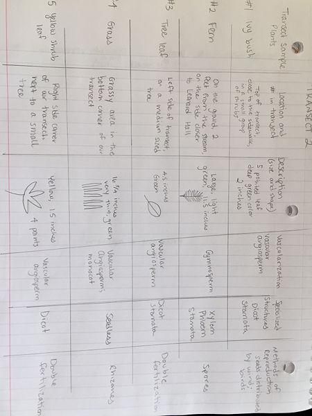 File:Chart for plantae and fungi lab.JPG