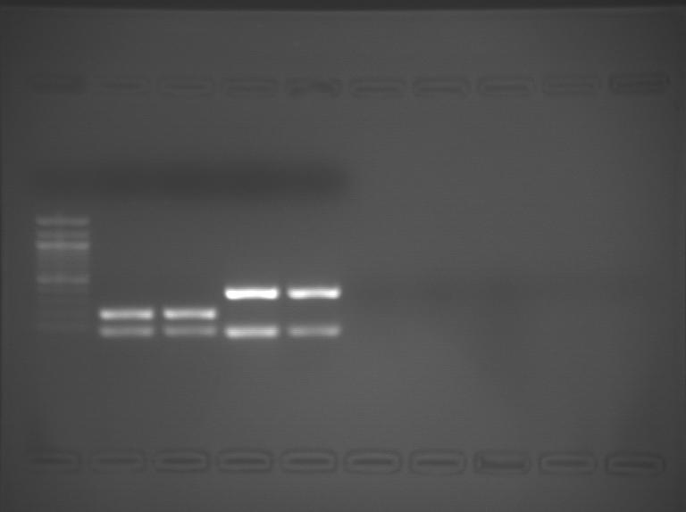 File:S09 M3D5 WF-Org-0.04-1.BMP