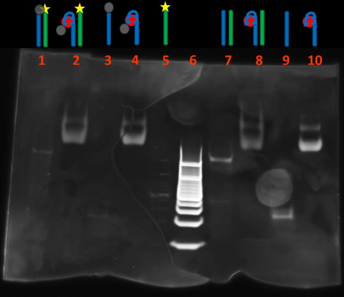 File:BM12 nanosaurs gel (Custom).png