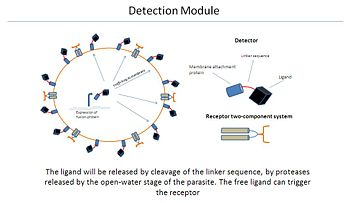 Detection module.JPG