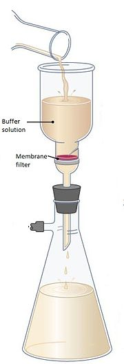 Assembly of Membrane Filtration Image Source: http://academic.pgcc.edu/~kroberts/Lecture/Chapter%206/counting.html