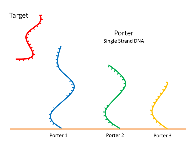 File:Porter-picture.png