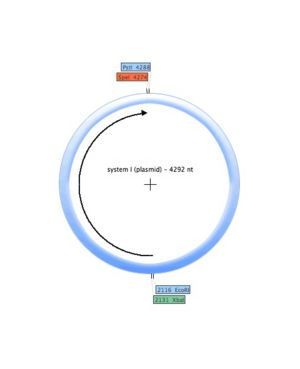 System I (plasmid).jpg