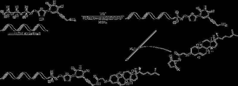 File:Biomod Aarhus Chem Scheme DNA.png