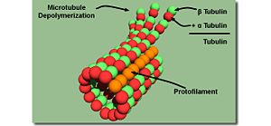 User Andy Maloney Introduction To Kinesin And Microtubules