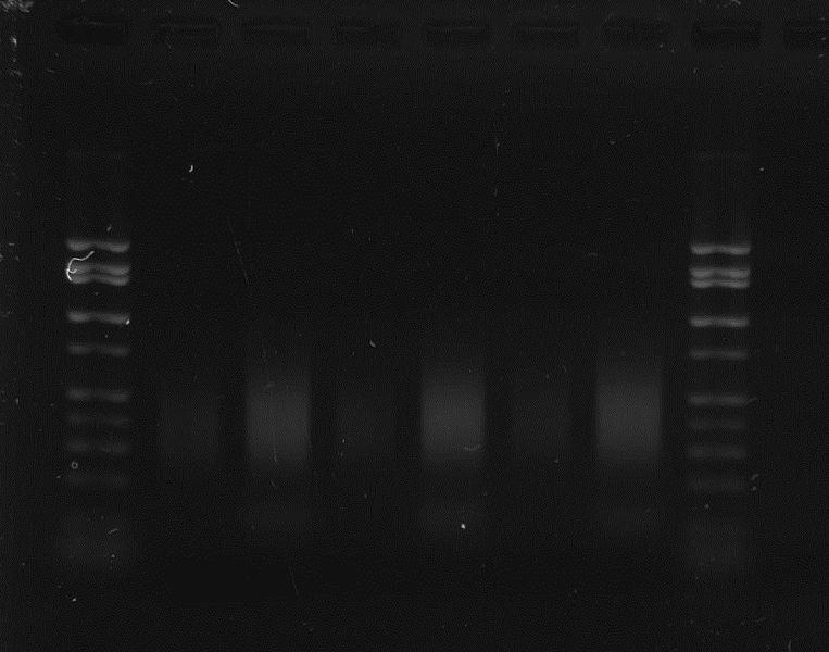 File:PCR-oldP1primer.JPG