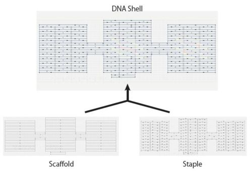 Fig. 1.1 The image of DNA Shell on CAD Nano.