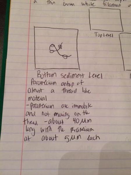 File:Bottom organism 1.png