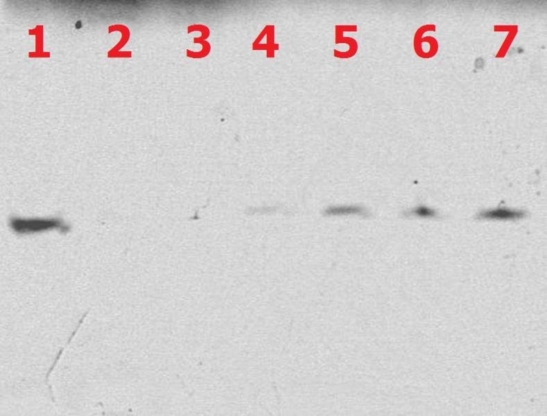 File:BM12 nanosaurs 2ndgel.jpg