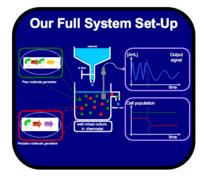 IGEM IMPERIAL DevCycle FullSystem.png