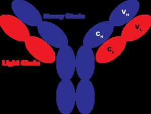 JCA-Antibody2.png