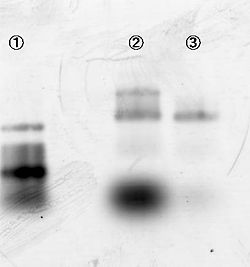 Figure 5. Gel filtration by S-400HR micro spin column. #1: 100bp DNA ladder marker, #2: 3D structure sample, #3: 3D structure sample through gel filtration