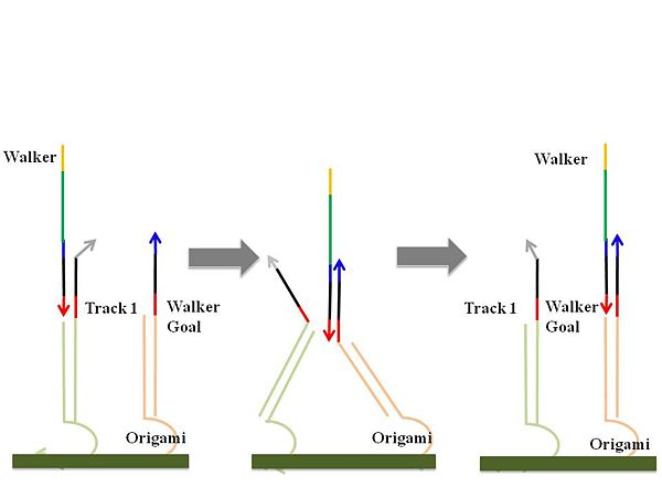 Figure 5. Walking to the walker goal mechanism