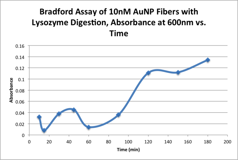 File:AMS Bradford Assay of 10nM AuNP Fibers with Lysozyme Digestion, Absorbance at 600nm vs. Time.png