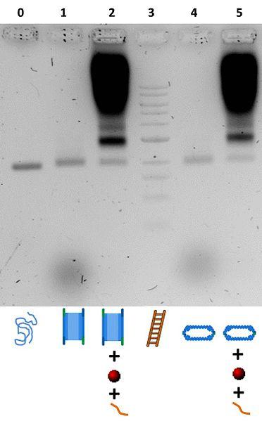 File:BM12 Nanosaurs ImageGel3.jpg