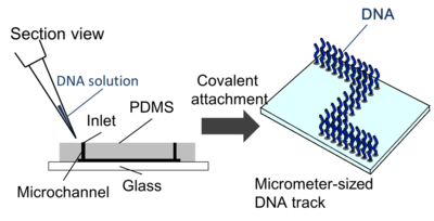 Figure2. Construction of DNA track