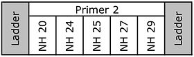 20110111 GelSchematicTR2.jpg