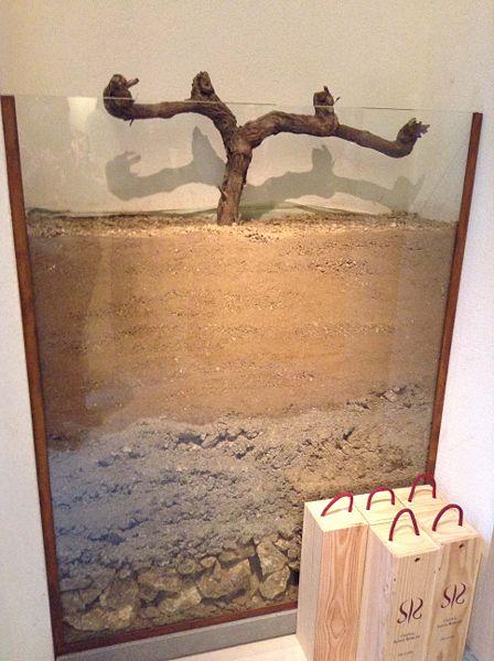 File:Grapevine soil profile.JPG