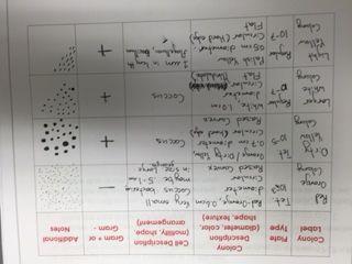 File:Hard Copy Observations.JPG