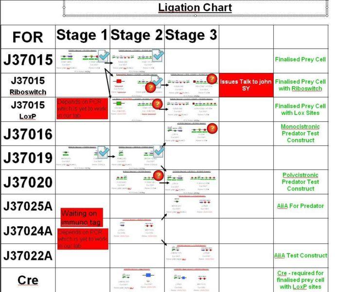 File:Ligation Chart 14 August.JPG
