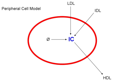 Peripheralcellmodel.png