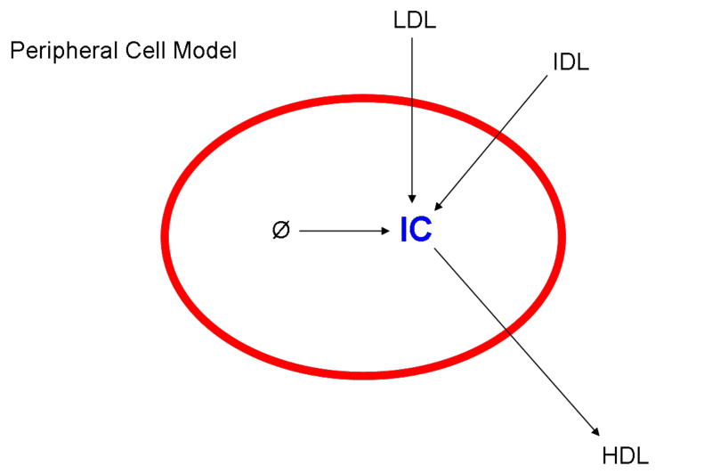 File:Peripheralcellmodel.png