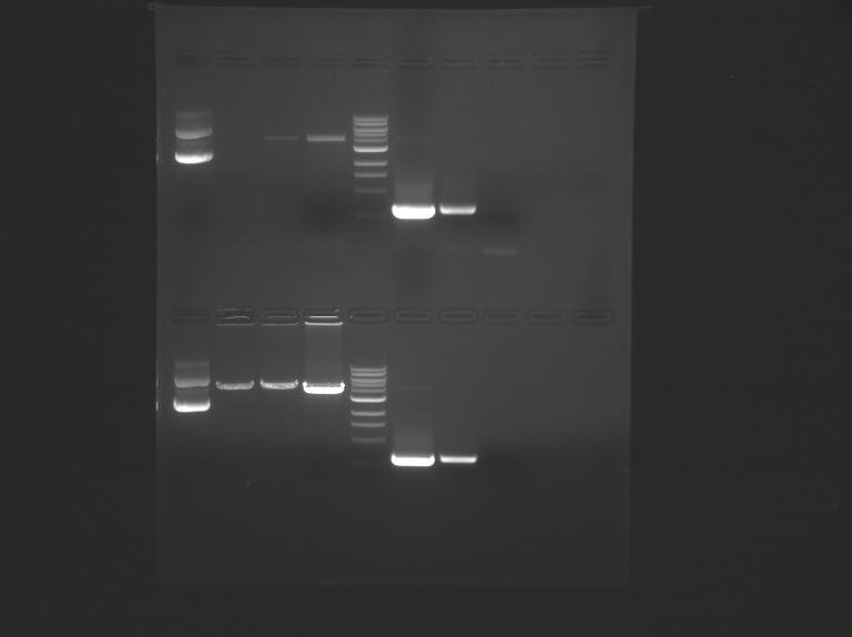 File:F13 M1D3 TR-Sil.jpg
