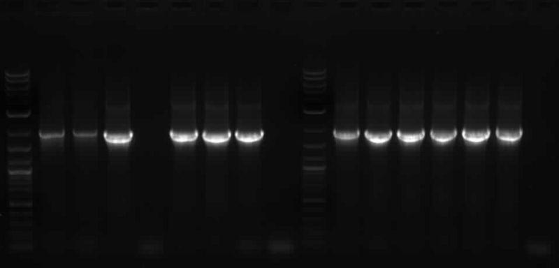 File:BC.PCH1497-4or10rRNA.jpg