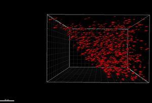 Biofilm biophysics webpage.jpg