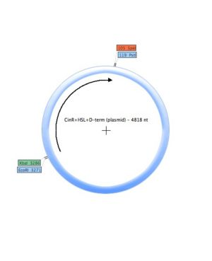 CinR-HSL-D-term (plasmid).jpg