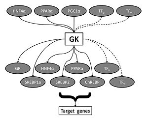 Fig1 GK transcriptional network.jpg