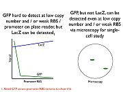 Problems to solve with GFP-lacZ fusion
