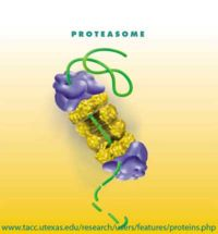 Proteasome.jpg