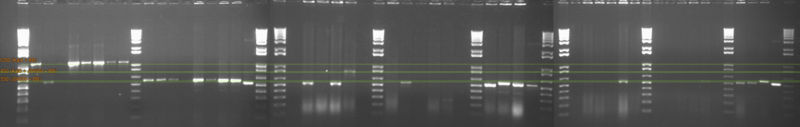 File:Stroustrup KaiAB screen.jpg