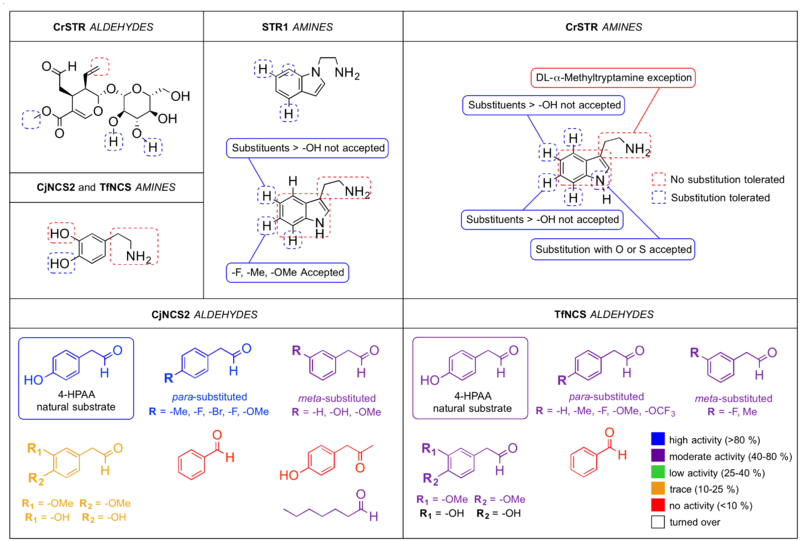 File:Substrate specificity for Pictet-Spenglerases.png
