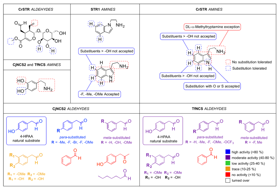 Scheme: (Substrate specificity for Pictet-Spenglerases). Summary of amine and aldehyde substrate specificity for strictosidine synthase and norcoclaurine synthase homologs, CrSTR, STR1, CjNCS2 and TfNCS