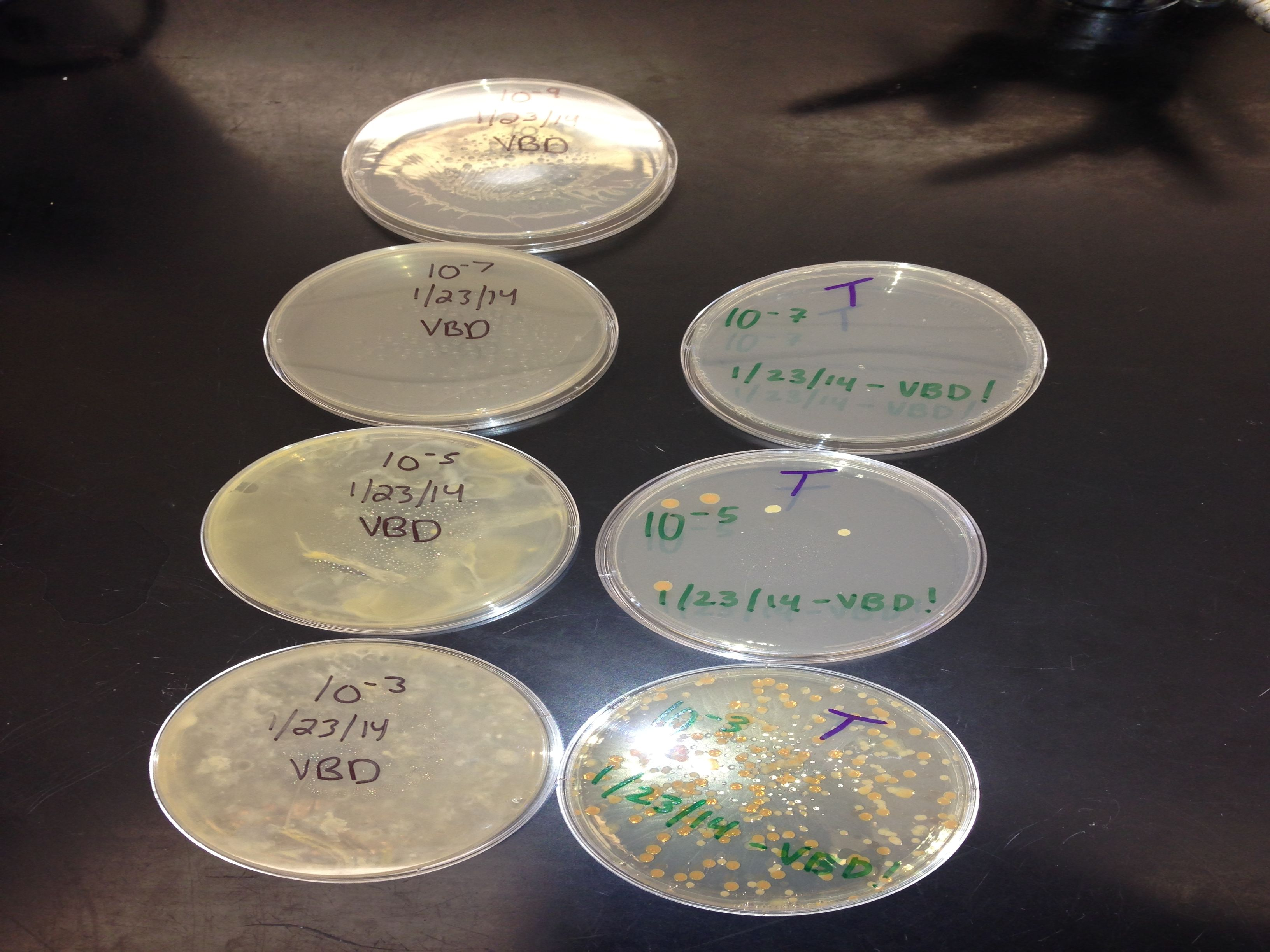 Group3bacteriacultures.jpg