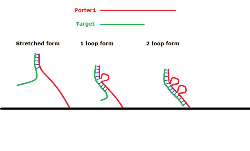 File:Porter1.png