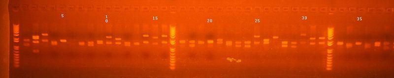 File:Re map methylated plate B part 1.jpg