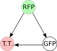 Graph A: This graph contains 3-nodes and 3-edges. We wanted to find a Hamiltonian path from the node representing RFP (colored in green) to the node representing the transcriptional terminator (colored in red).