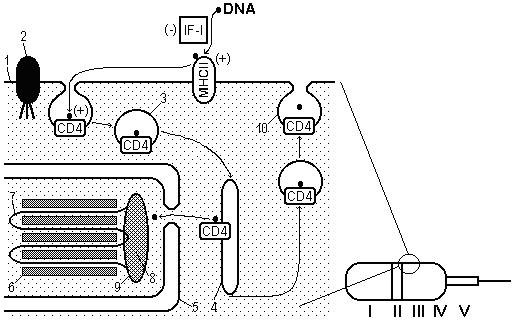 File:SP-model-1.bmp