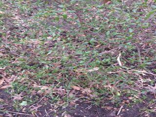 Small green bush.jpg