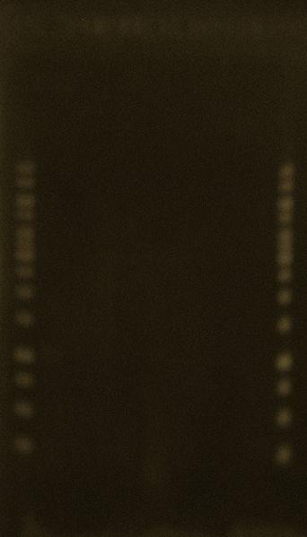 File:Test PCR 18Jun2010.JPG
