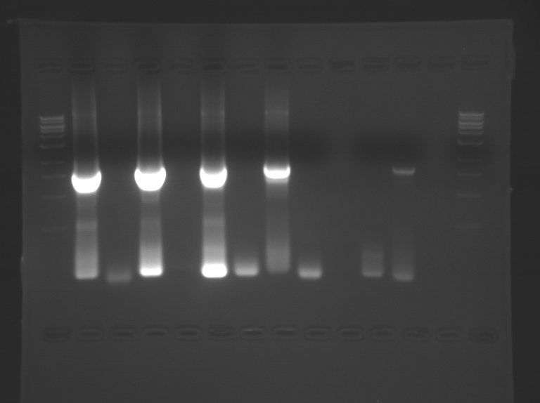 081010 PCR WF.BMP