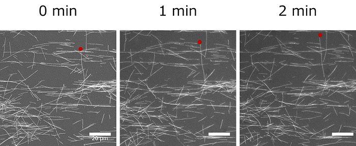 GFP microtubule.jpg